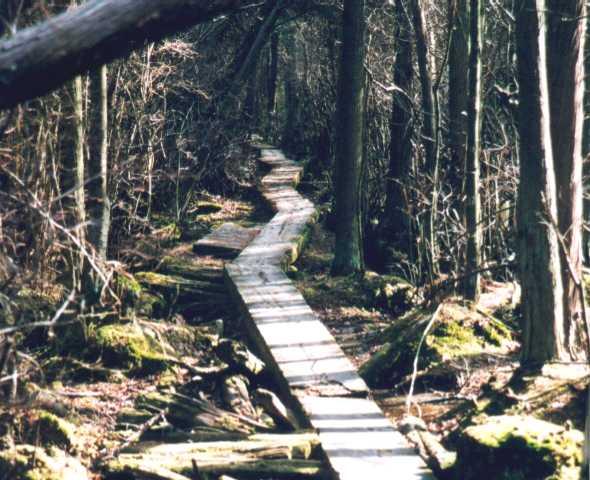 Ponkapoag Bog Boardwalk (Blue Hills)